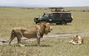 Africa | Foto por Renner Safaris