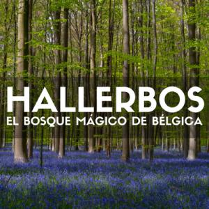 VISITAR HALLERBOS BÉLGICA