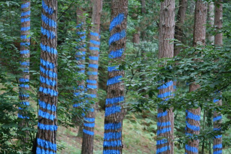 Visitar Bosque de Oma